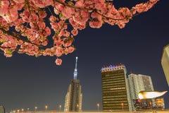 东京skytree在晚上和樱花在东京 库存图片