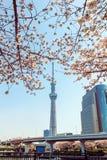 东京Skytree塔在有樱花的日本 库存图片