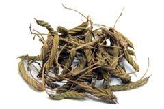 东印度人山芝麻(Helicteres isora (L.)) 免版税库存照片
