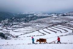 东川,云南红色土地农夫在多雪的农田里 免版税库存照片