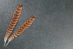东方海湾猫头鹰羽毛代表鸟羽毛背景c 免版税库存图片