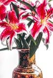 东方百合,百合属植物cernuum占星师 免版税图库摄影