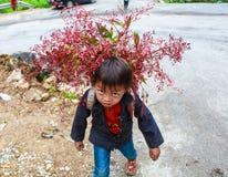 东范,河江市,越南, 2017年11月14日, :未认出的少数族裔哄骗与油菜籽花篮子在Hagiang 库存图片