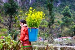 东范,河江市,越南, 2017年12月18日, :未认出的少数族裔哄骗与油菜籽花篮子在Hagiang 免版税图库摄影