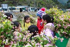 东范,河江市,越南, 2017年12月18日, :未认出的少数族裔哄骗与油菜籽花篮子在Hagiang 库存照片