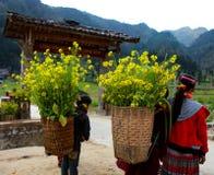 东范,河江市,越南, 2017年1月01日:未认出的少数族裔哄骗与油菜籽花篮子在Hagiang 免版税图库摄影