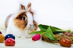 东部兔子 图库摄影