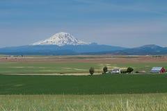东部华盛顿谷农业的麦子农场与瑞尼尔山 免版税图库摄影