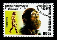 东非猿人,人类serie的演变,大约2001年 库存图片