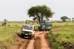 东非雌狮和游人徒步旅行队汽车的 库存照片