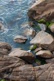 丝毫海鸥坐在小海湾的湿岩石 库存照片