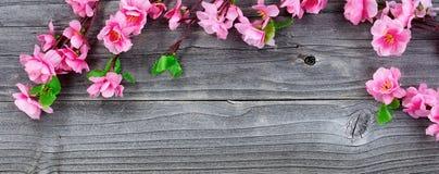 丝绸樱花在顶上的图fo的葡萄酒木头分支 库存图片