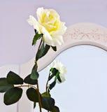 丝质前镜子的玫瑰 图库摄影