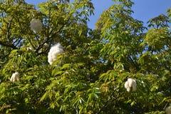 丝绸绣花丝绒树 图库摄影