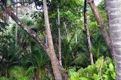 丢失在一个热带森林里 免版税库存图片