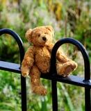丢失的熊 免版税库存图片