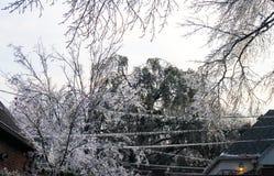 丢失的电-在电线的冰柱和在两个房子之间的树枝的危险在冰暴期间 库存图片