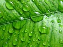 丢弃新鲜的绿色事假宏指令水 库存照片