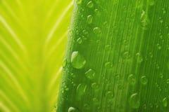 丢弃新鲜的绿色叶子工厂水 库存图片