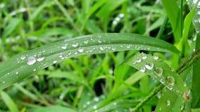 丢弃草绿色水 股票视频
