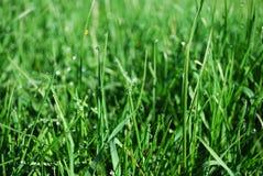 丢弃草绿色水 免版税库存照片