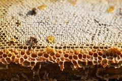 丢弃蜂蜜 免版税库存照片