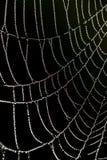 丢弃spriderweb 免版税库存照片