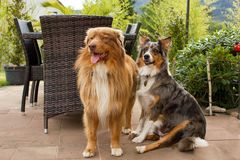 两三条俏丽的狗 免版税图库摄影