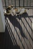 两三猫在凉快的上午晒日光浴 图库摄影