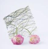 两与秸杆的桃红色玫瑰花蕾 免版税库存照片