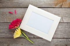 两个五颜六色的大丁草花和照片框架 免版税库存照片