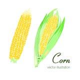 两个五颜六色的玉米的传染媒介例证 免版税库存图片