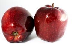 两个光泽红色苹果 免版税库存图片