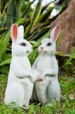 两个兔子玩偶在庭院里 免版税库存照片