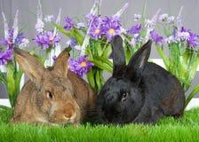 两个兔宝宝在庭院里 免版税库存照片