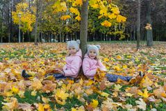 两个双姐妹在槭树下坐黄色枫叶地毯  免版税图库摄影