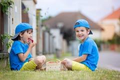 两个可爱的小孩,男孩兄弟,吃草莓, 库存照片