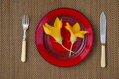 两个夏天南瓜夏南瓜在桌上的红色板材开花 免版税库存照片