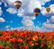 两个多色气球飞行 免版税图库摄影
