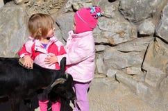 两个女孩和山羊 免版税图库摄影