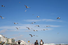 两个女孩用食物跑远离在海滩攻击他们的鸥 库存照片