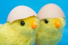两个婴孩小鸡和破裂的鸡蛋在他们的头 孵化在蛋壳外面的玩具鸟 库存照片