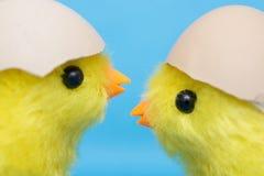 两个婴孩小鸡和破裂的鸡蛋在他们的头 孵化在蛋壳外面的玩具鸟 免版税库存图片