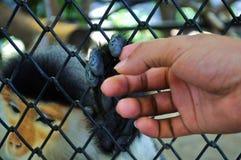两个字符,动物和人连接 免版税图库摄影