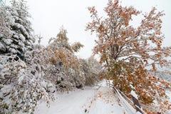 两个季节-冬天和秋天场面在公园 库存图片