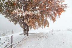 两个季节-冬天和秋天场面在公园 免版税库存图片