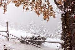 两个季节-冬天和秋天场面在公园 库存照片