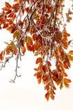 两个季节-冬天和秋天场面在公园 免版税库存照片