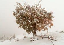 两个季节-冬天和秋天场面在公园 免版税图库摄影