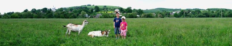 两个孩子和两只白色山羊在绿色领域 库存照片